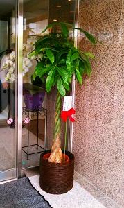 plant02.jpg