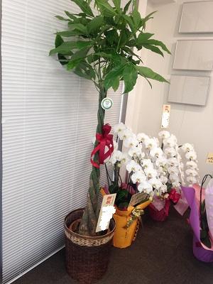 plant08.jpg