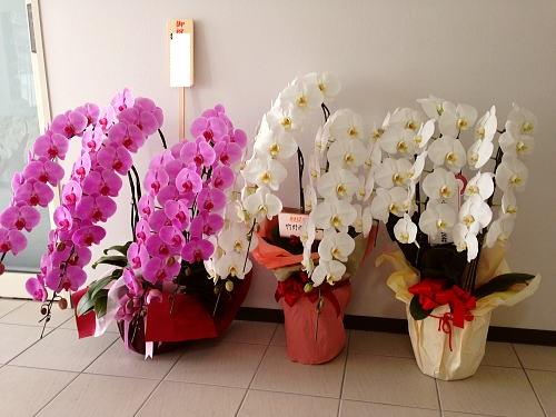 開院のお祝いに贈る花