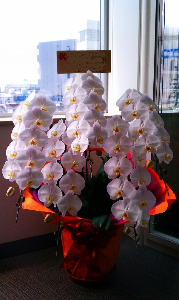 大臣への祝い花