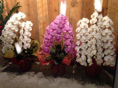 開院お祝いに蘭の花