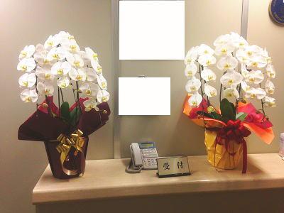 社長交代のお祝い花