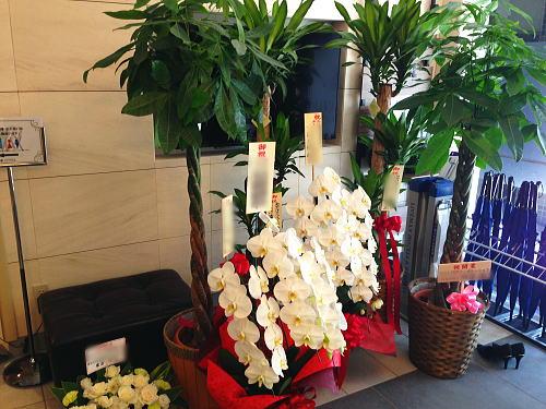 ホテルのオープン祝い花