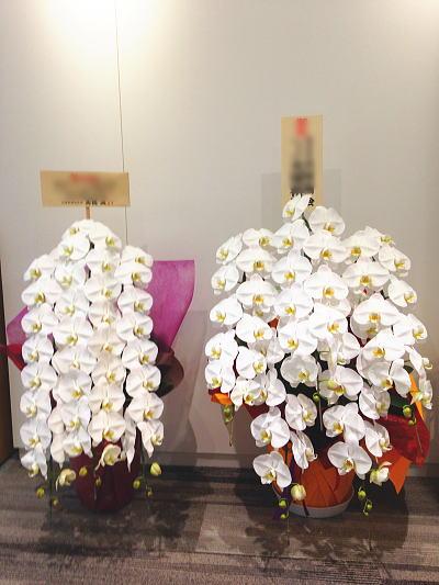 大きな胡蝶蘭5本立
