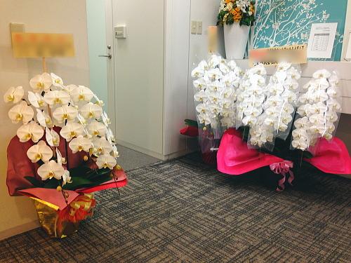 創立記念に贈る胡蝶蘭