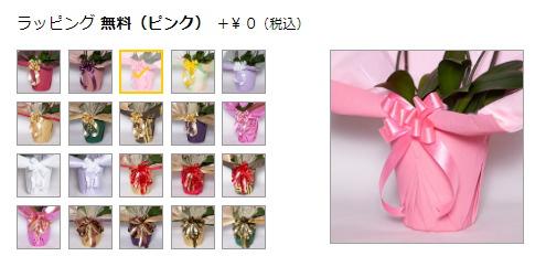 胡蝶蘭のラッピング選択
